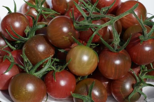 Die Tomate Black Cherry ist eine beliebte dunkelrote Cocktailtomate.