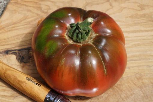 Die Tomate 'Black Krim' bildet große flache Früchte.
