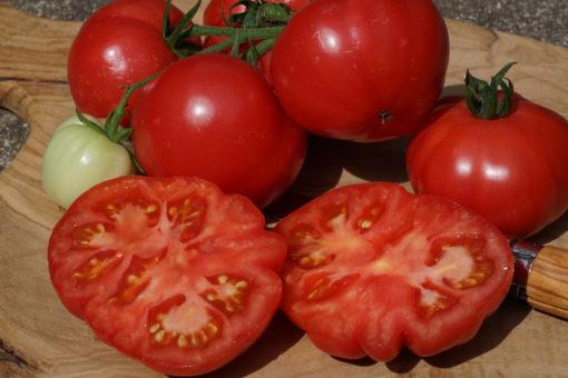 Die alte Tomaten - Landsorte Berner Rosen überzeugt durch ihren süßlichen Geschmack.