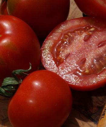 Die reifen Tomaten der panaschierten Sorte Splash of Cream.