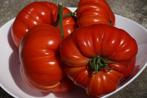 Früchte von weit über 500 Gramm sind bei der Tomate 'Mariannas Peace' keine Seltenheit.