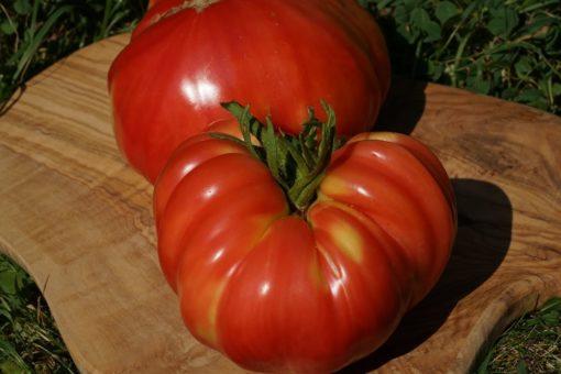 Sehr große und für eine Fleischtomate sehr süße Früchte sind das Markenzeichen von Marianna's Peace'.