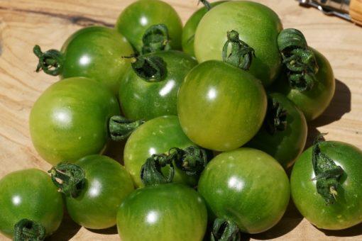 Süße und zugleich würzige Früchte bringt die Tomate Green Doctors hervor.