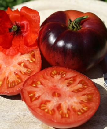 Lecker große Tomaten. Die Tomate 'Amethyst Jewel' ist eine Wucht.