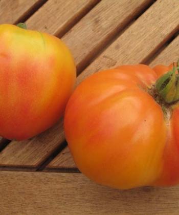 Die 'Ananastomate' bringt riesige, bis zu 1 Kg große, Tomaten hervor.