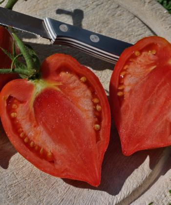 Aufgeschnitten erinnern die Früchte der Tomate Striped Roman an Herzen.