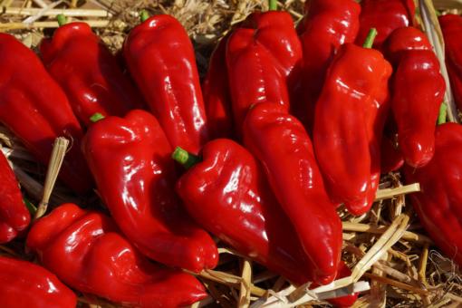 Bei der Paprika Figitelli Sicilia handelt es sich um eine Sorte aus Sizilien mit süßlichem Aroma.