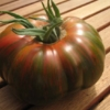Tomate Berkeley Tie Dye