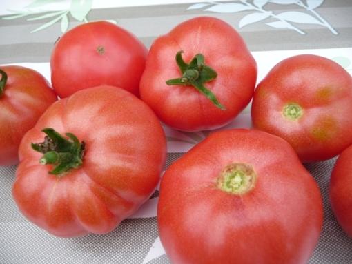"""Tomate 'Berner Rosen"""""""