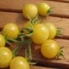 Tomate Bianca