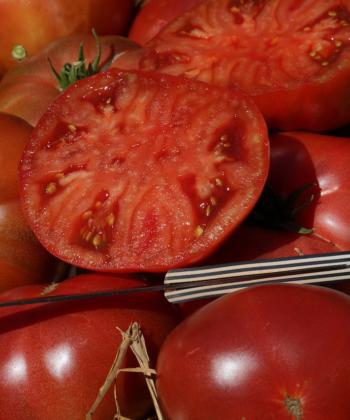 Die Tomate Boronia ist ideal für den Frischverzehr geeignet.