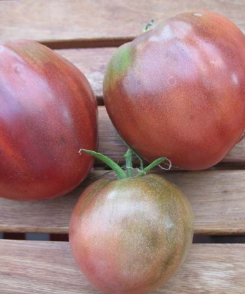 Tomate Brads Black Heart