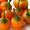 Chili (Capsicum ) 'Pis Bas Harari'. Eine kleine Chili, die auch gut im Freiland trägt.