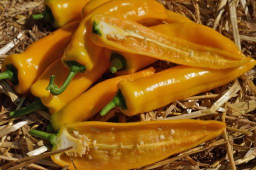 Die Paprika Doux Long d' Antibes ist quittengelb und schmeckt hervorragend.