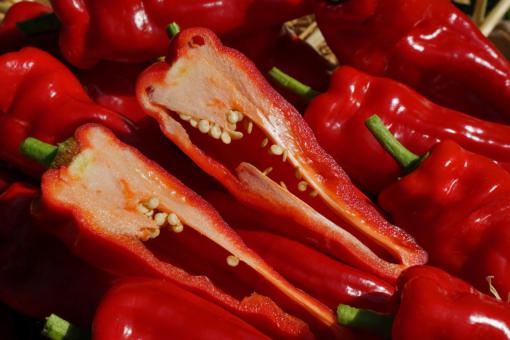 Die Spitz-Paprika Figitelli Sicilia bringt zarte und sehr wohlschmeckende Schoten hervor.