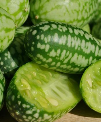 Melothria - Mexikanische Minigurke