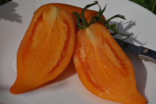 Die Tomate Buratino überzeugt mit einem süßen und ausgewogenen Tomatenaroma.