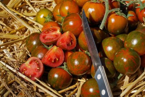 Die dickwandigen Früchte von Black Zebra Cherry sind auch innen tiefrot.