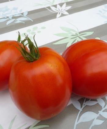 Tomate Dinner Plate