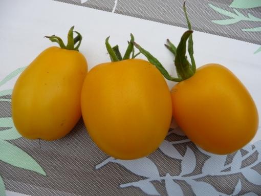 Tomate Gelbes Fragezeichen