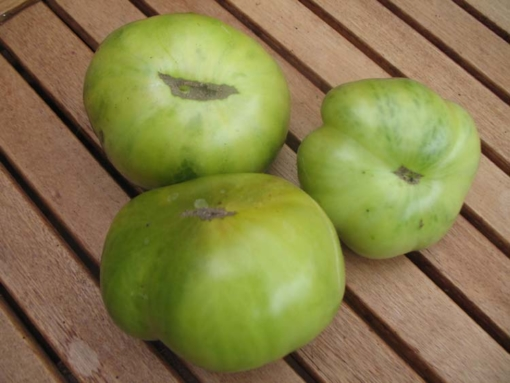Tomate Giant Green