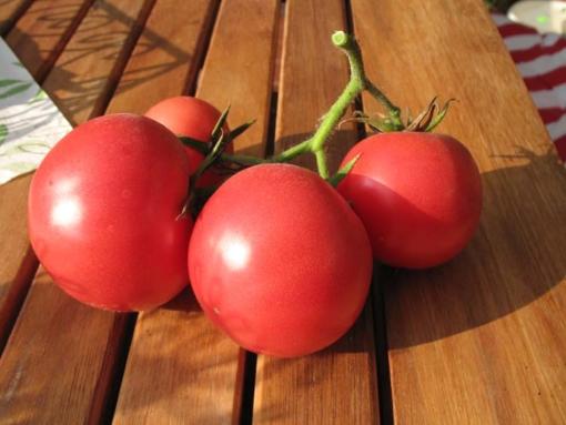 Tomate Korean Love