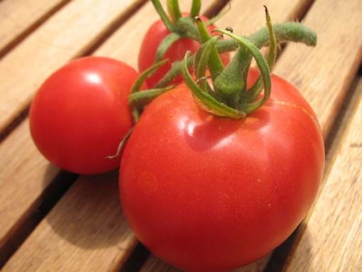 Tomate Kotlas (Sprint)