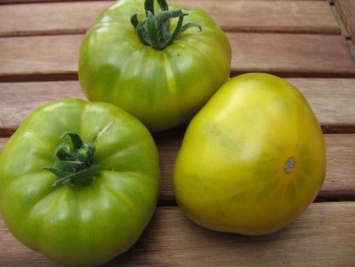 Tomate Malakhitovaya Shkatulka