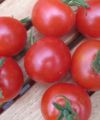 Tomate Mexikanische Honigtomate 2