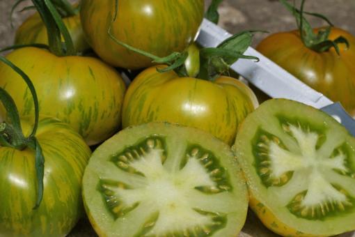 Optisch und geschmacklich weit Vorne: Tomate Green Zebra