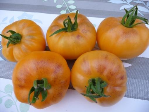 Tomate Orange Fleshed Purple Smudge