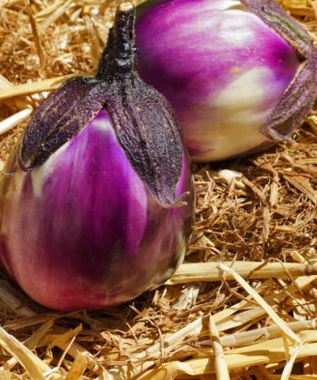 Die Aubergine Prosperosa ist eine leckere und ertragreiche Sorte aus Süditalien.