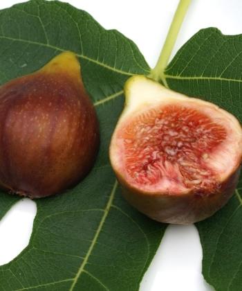 Saftig, Süß und früh reifend die Früchte von Ficus carica 'Brunswick'.