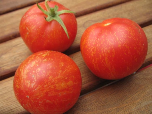Tomate Scabitha