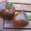 Tomate Schokorella