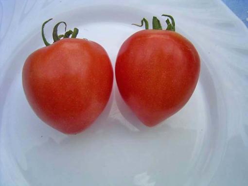 Tomate Small Fry Orange