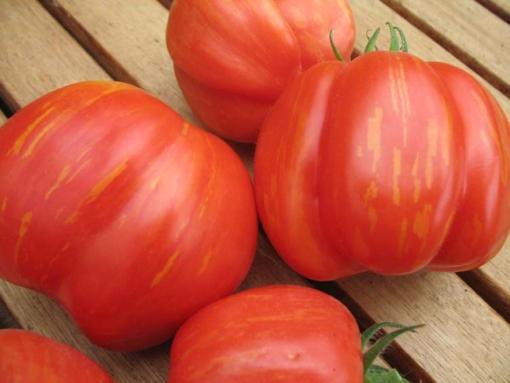 Tomate Striped Cavern