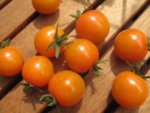 Tomate Sungold Selected