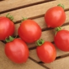 Tomate Tip Top