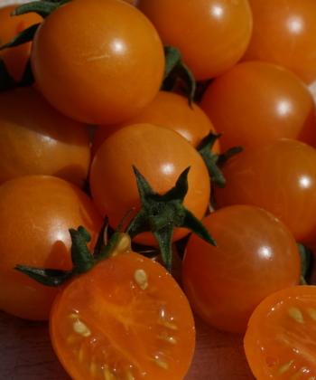 Die Aprikosenkirsche ist eine Stabtomate.