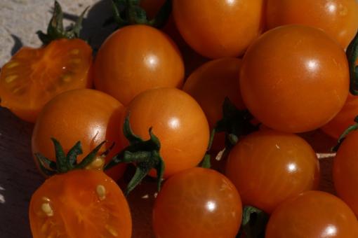 Das Aroma der Tomatensorte 'Aprikosenkirsche' ist fein und ausgewogen.