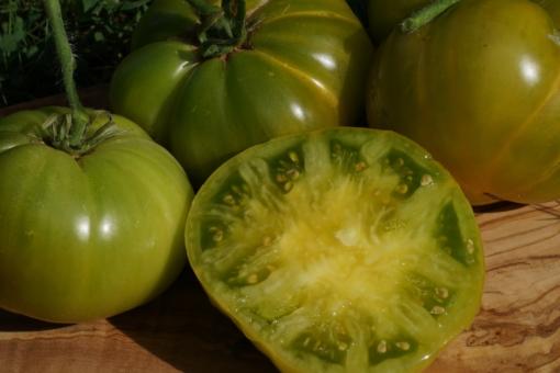 Die Tomate Aunt Ruby's German Green ist zu recht einer der beliebtesten Tomatensorten bei uns.