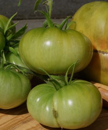 Tomate Aunt Rubys German Green: Zur reife werden die Früchte leicht gelblich.
