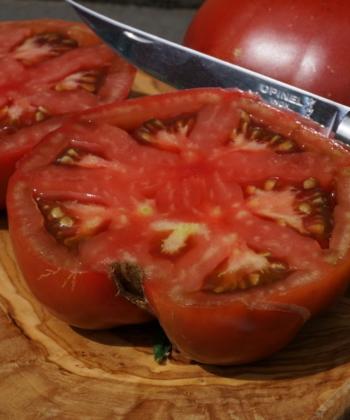 Die Tomate Black from Tula ist ertragreich und robust.