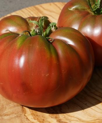 Tomate Black from Tula ist eine alte und robuste russische Tomatensorte.