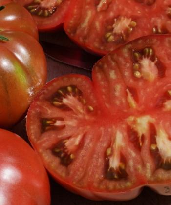 Die Tomate 'Black from Tula' ist sauleckere und schwarzrot gefärbt.
