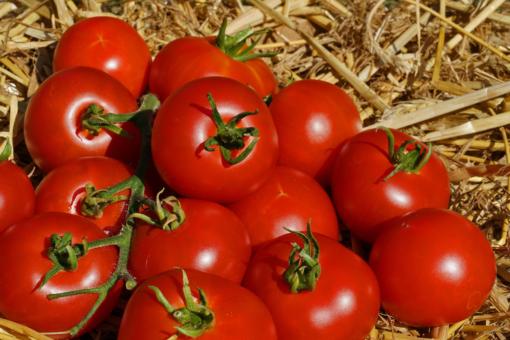 Aus dem Rheinland stammt die historische Tomate Bonner Beste.