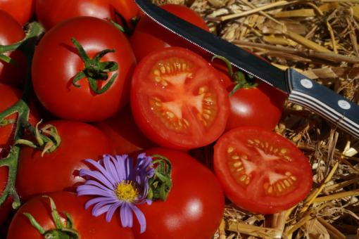 Der Name dieser Tomate ist Programm: Bonner Beste.