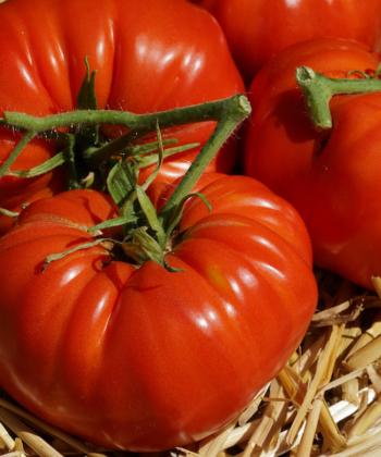 Tomate Brandywine Glicks