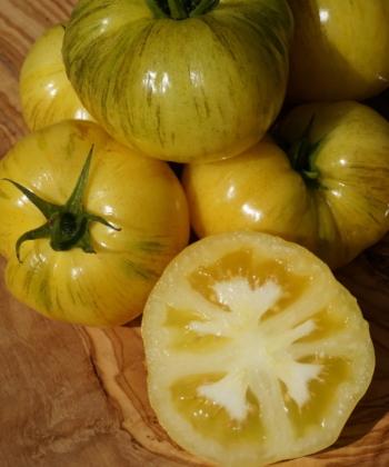 Tomate Dwarf Yellow Wax (3)